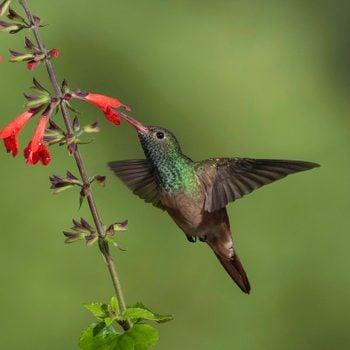 Discover the Amazing Lower Rio Grande Valley Birds