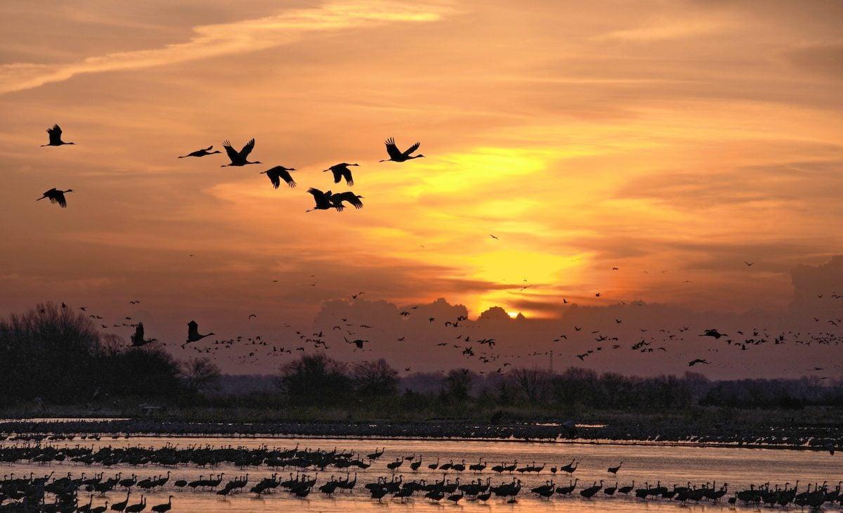 sandhill crane migration nebraska