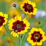 Top 10 Easy-to-Grow Native Plants