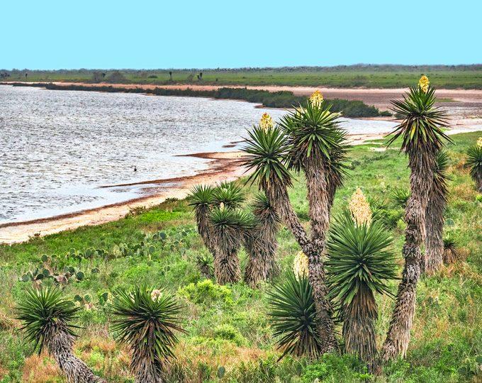 Laguna Atascosa Nwr Gulf Of Mexico
