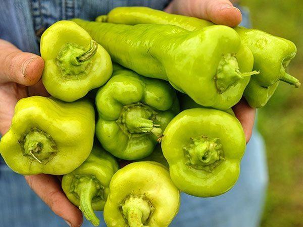 Pepper Cubanelle Deb Lss 000 8707
