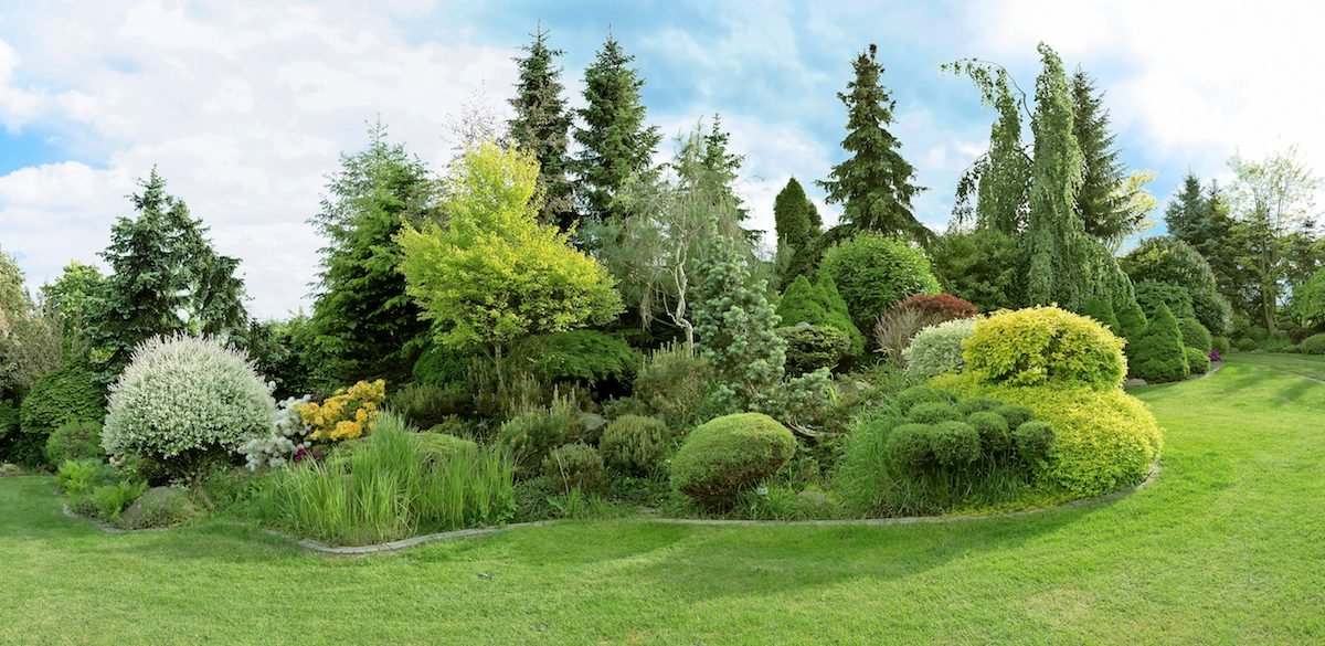 A variety of evergreens planted together in a whimsical way.