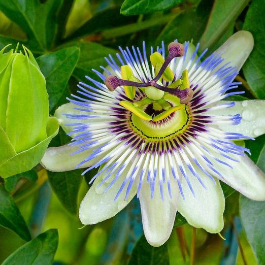 10 Beautiful Flowers to Inspire Your Dream Garden