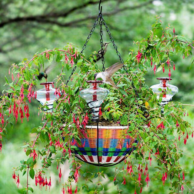hanging basket hummingbird feeder