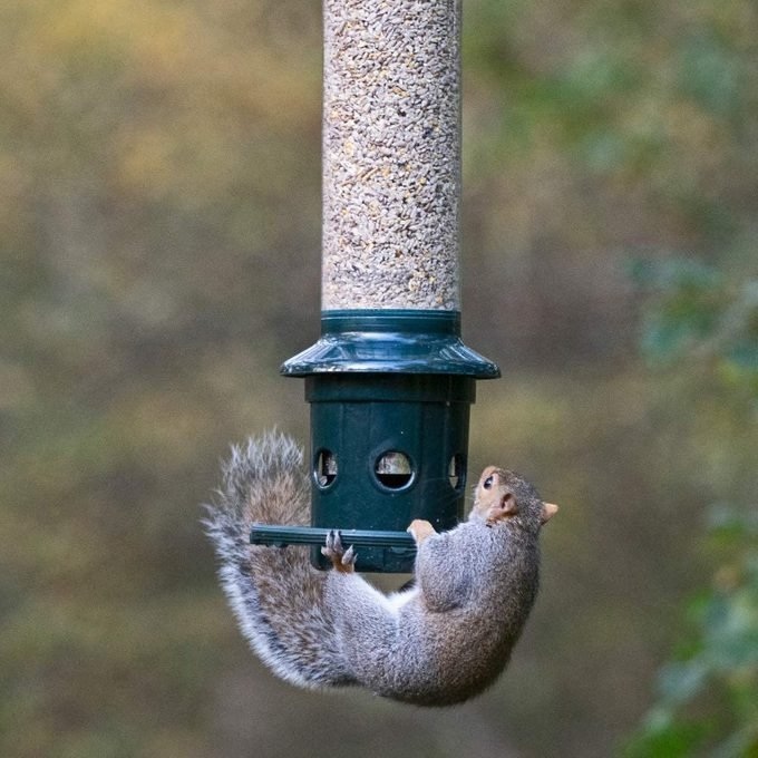squirrel buster plus feeder
