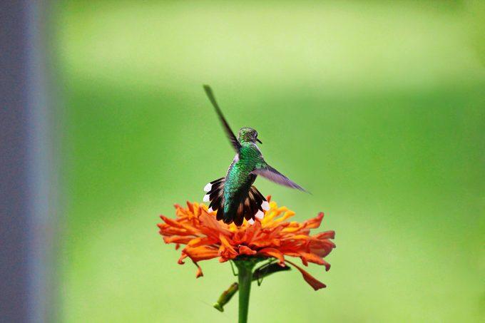 praying mantis hummingbird