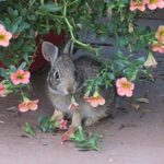 Expert Garden Advice on Rabbit Resistant Flowers