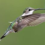 Use an Ant Moat for Your Hummingbird Feeders