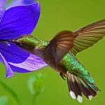 How to Create an Ideal Hummingbird Habitat
