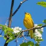 16 Spring Warbler Birds You Should Know