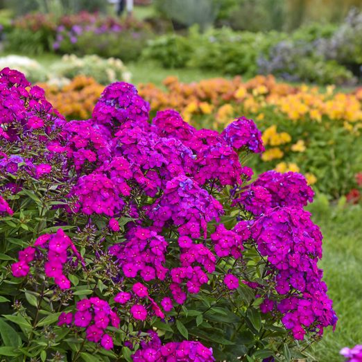 new garden plants