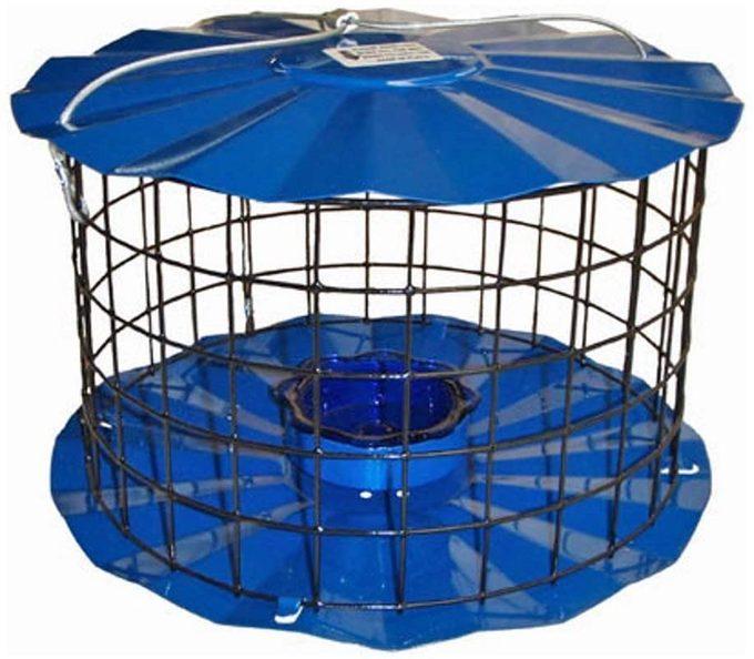 Cagedbluebirdfeeder