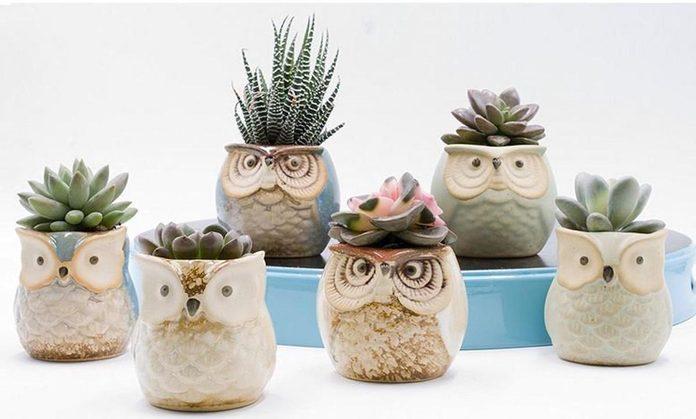 owl succulent planters
