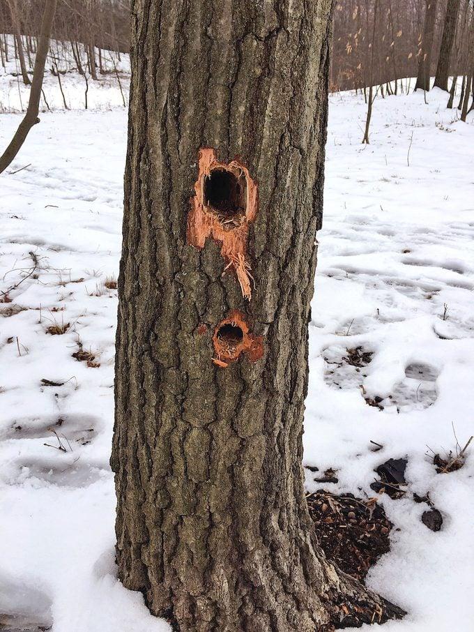 woodpecker pecking on tree
