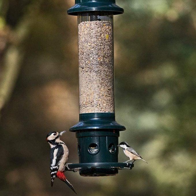 squirrel buster plus bird feeder