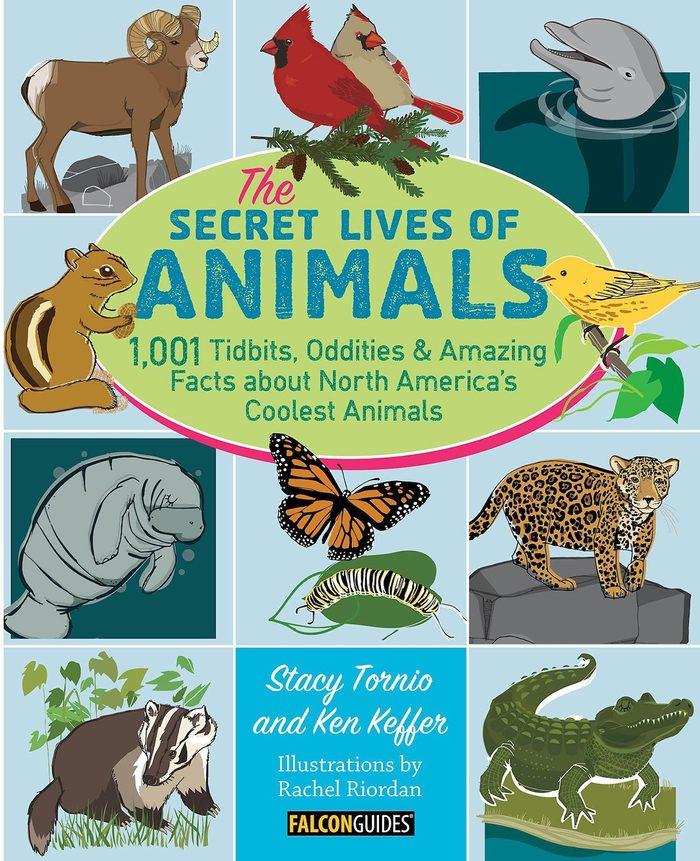 secret lives of animals