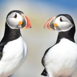 The 4 Best Ways to See Puffins in Maine