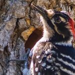 Try Digiscoping to Take Better Bird Photos