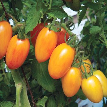 The Best New Vegetables to Grow This Summer