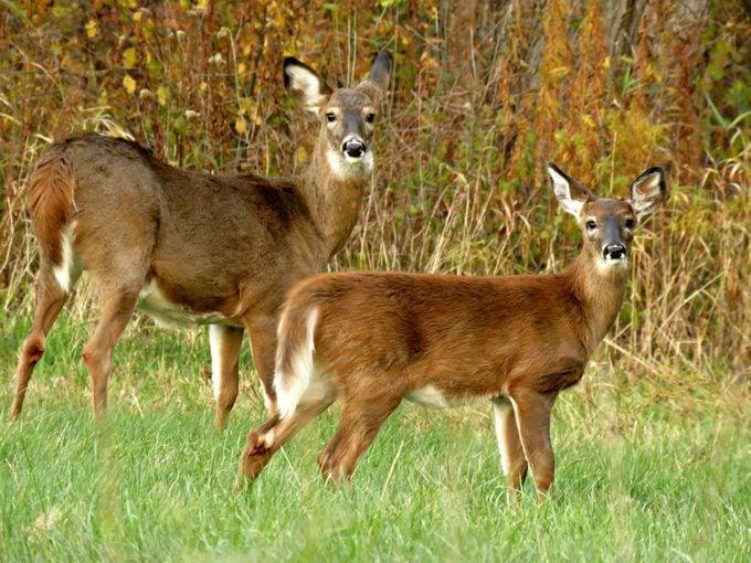 deer deterrents
