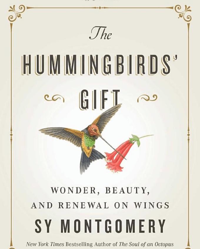 the hummingbird's gift book