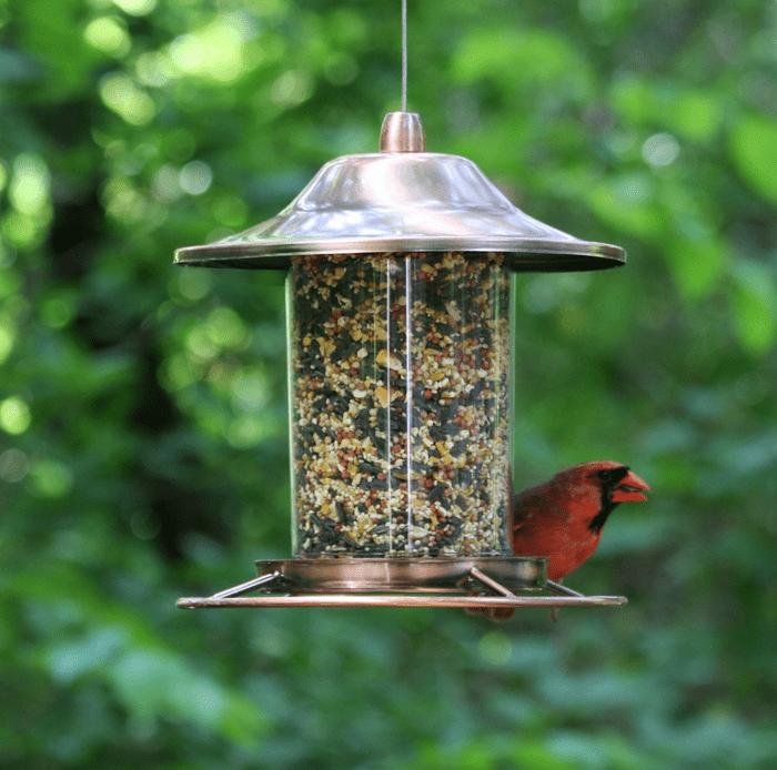 perky pet panorama feeder