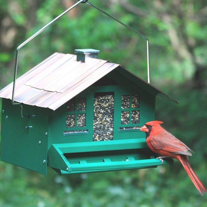 squirrel-be-gone feeder