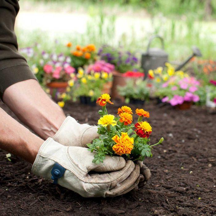 Garden Gloves Gettyimages 1156537866