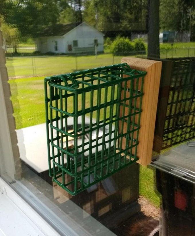 window suet feeder