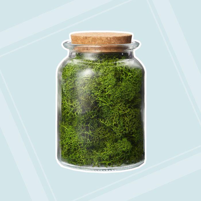 Preserved Moss Decorative Filler Green Hilton Carter