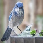 Meet the Jays: 8 Types of Jays You Should Know