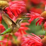 Attract Hummingbirds to Your Small Garden