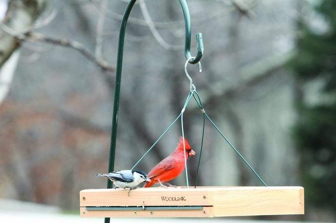 woodlink platform feeder