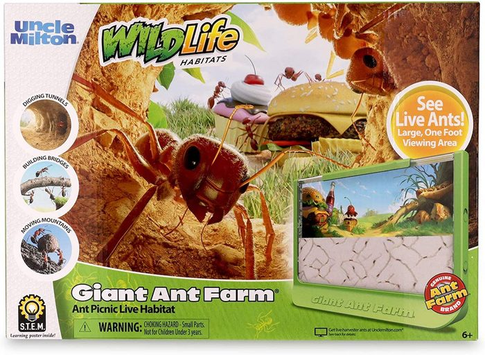 giant ant farm