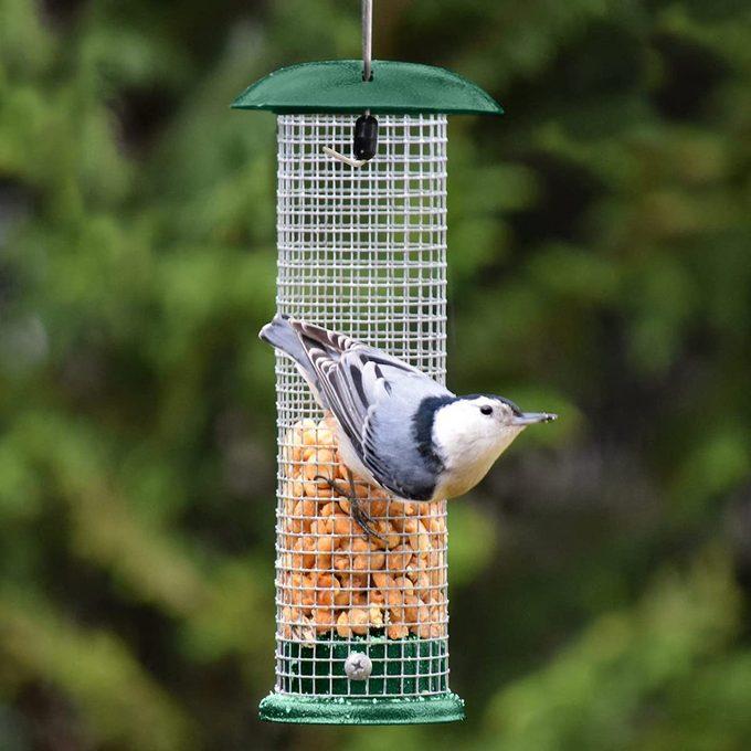 gray bunny peanut blue jay feeder