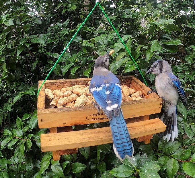 picnic table blue jay feeder