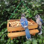 The Best Bird Feeders for Blue Jays