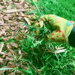 The Best Natural Way to Kill Weeds