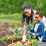 Ultimate Gardening Tips to be the Best Plant Parent