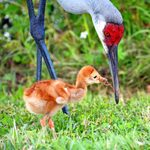 15 Adorable Photos of Bird Mothers With Babies