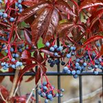 Easy Ways to Use Vining Plants All Around Your Garden