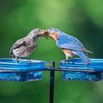 9 Easy Tips for Feeding Birds in Summer