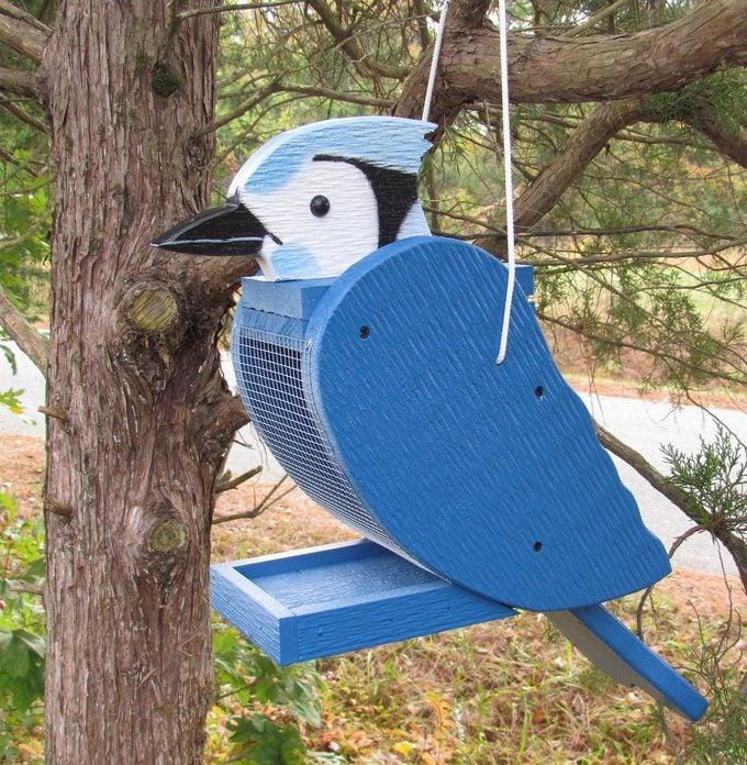 blue jay bird feeder
