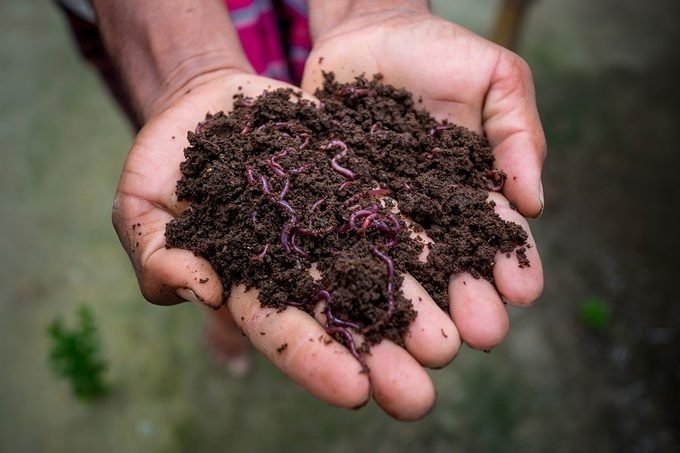Vermicompost Gettyimages 1219389664 2 2 2