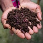 Vermicomposting: A Beginner's Guide