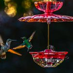 5 Fascinating Facts About Fall Hummingbird Migration