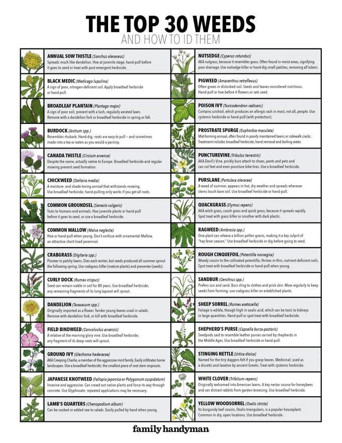 30weeds Chart