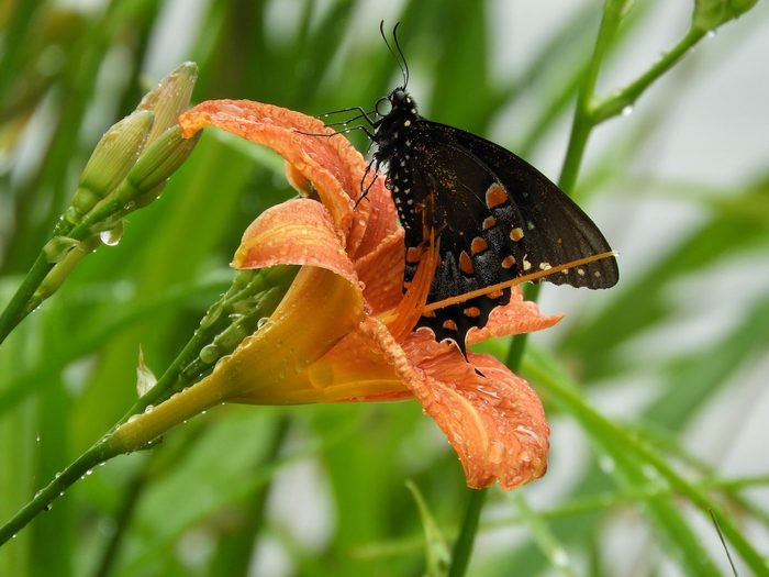 where do butterflies go when it rains