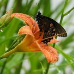 Where Do Butterflies Go When It Rains?