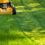 7 Tips for Growing a Healthy Lawn